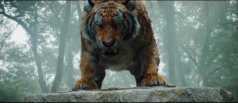 4_tiger02.jpg